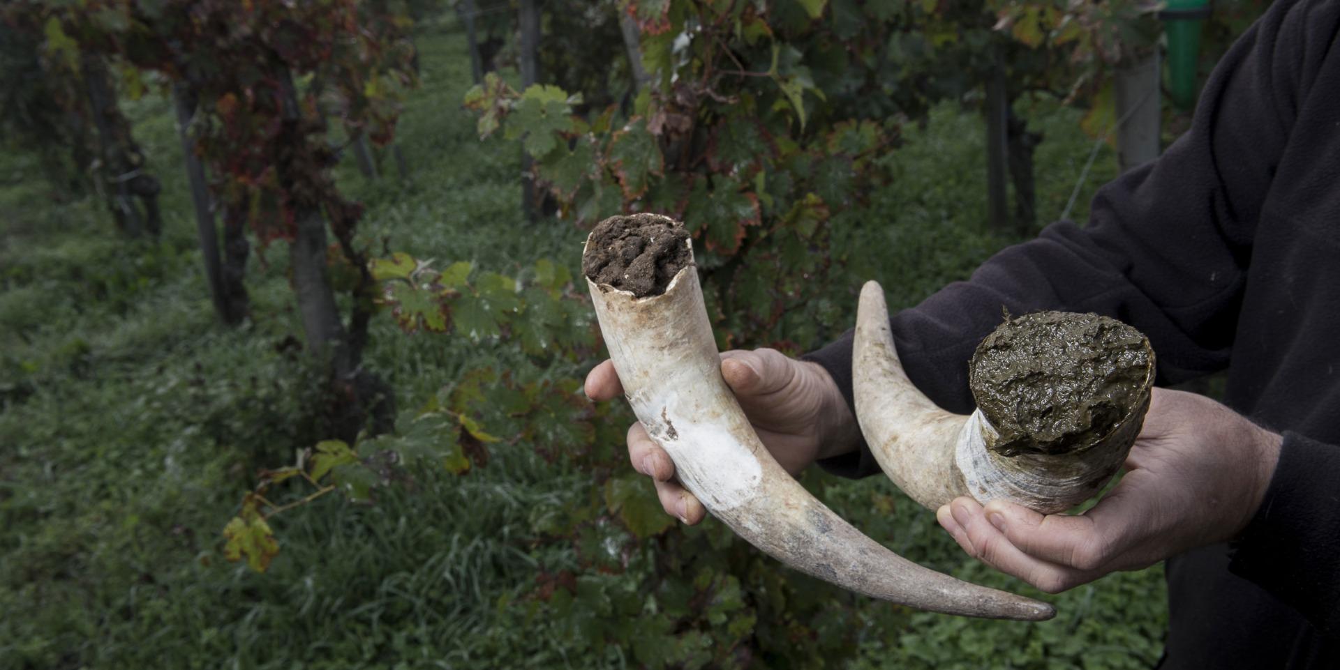 PrikenTik wijnstreken - Bio - Wijnen2