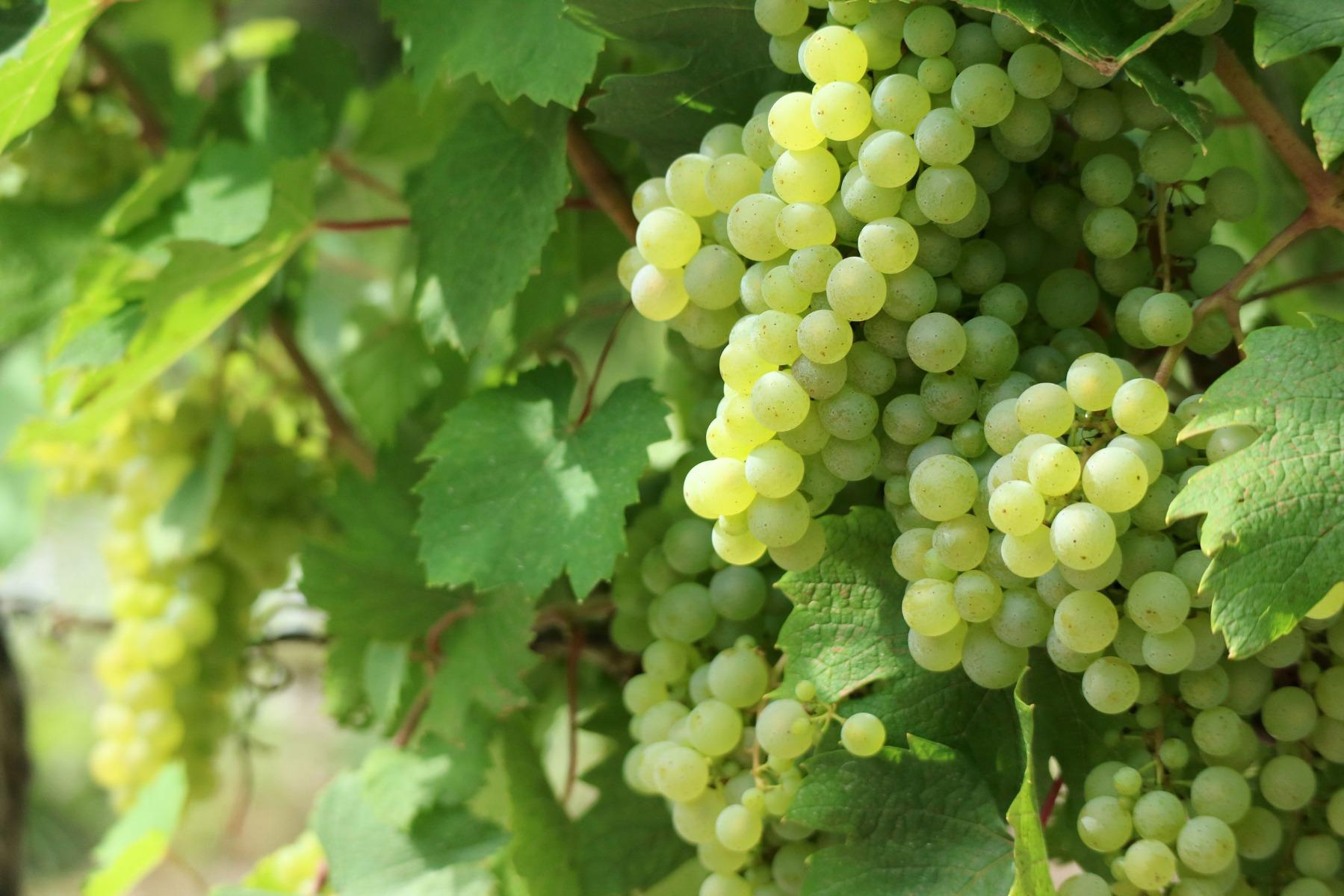 PrikenTik wijnstreken - Bio - wijnen