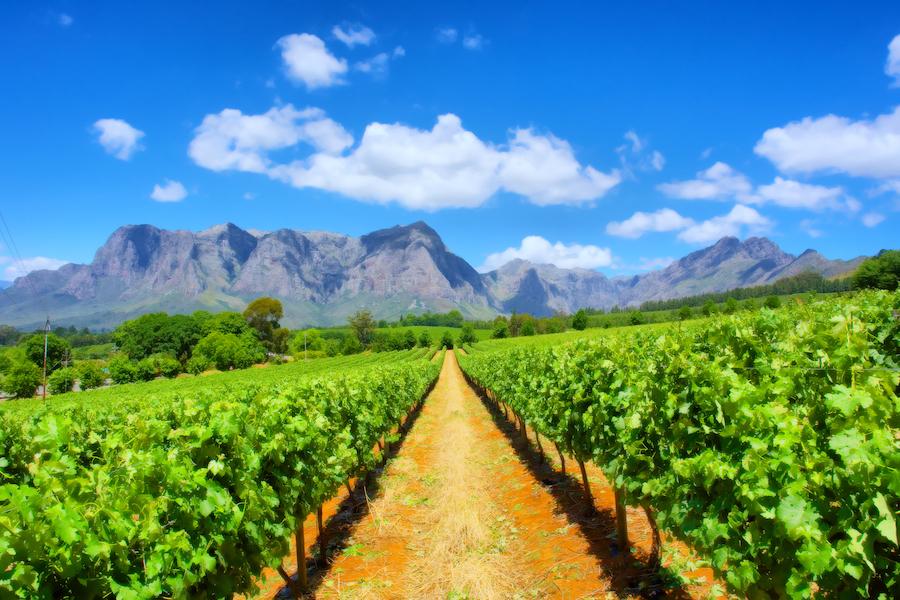 Prik&Tik - Zuid-Afrikaanse wijn - wijnlanden