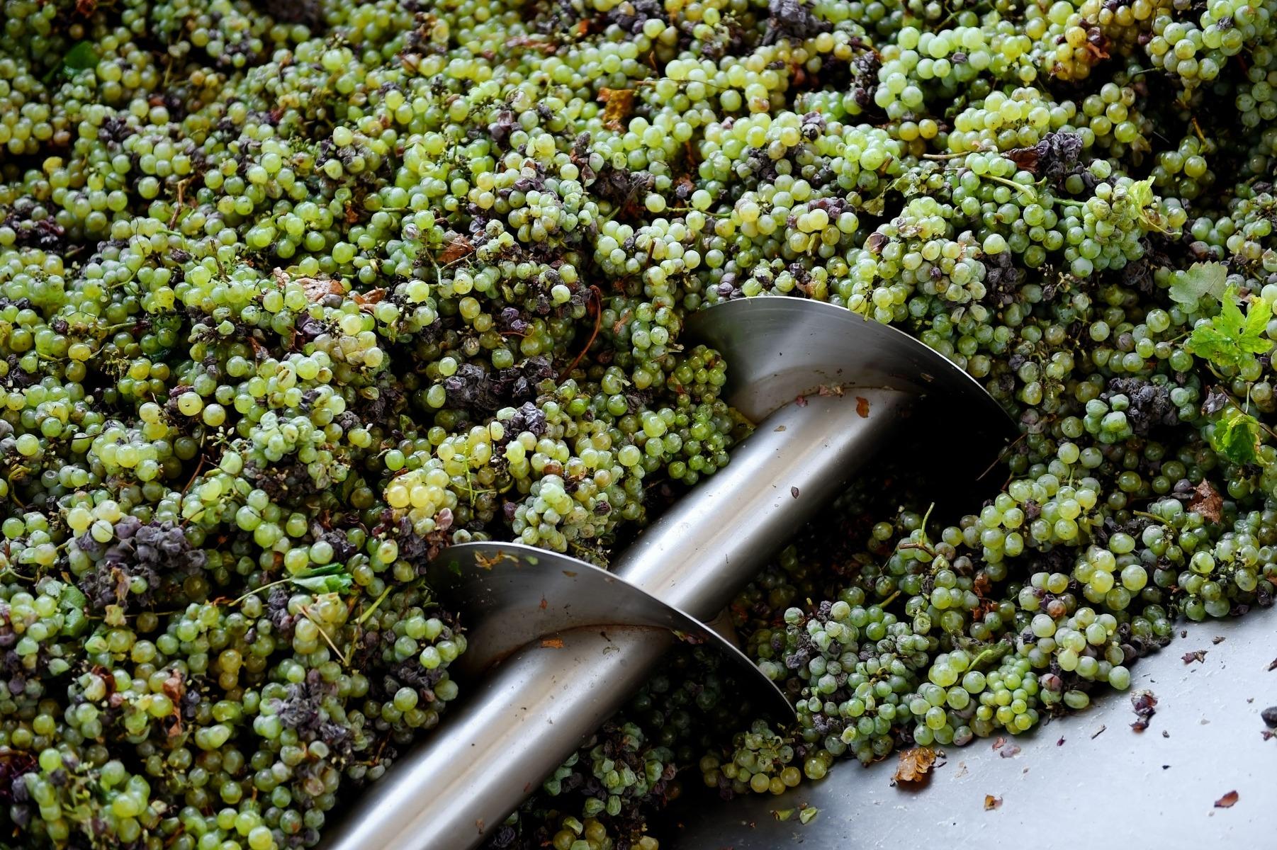 PrikenTik wijnstreken - alcoholvrije wijn 2