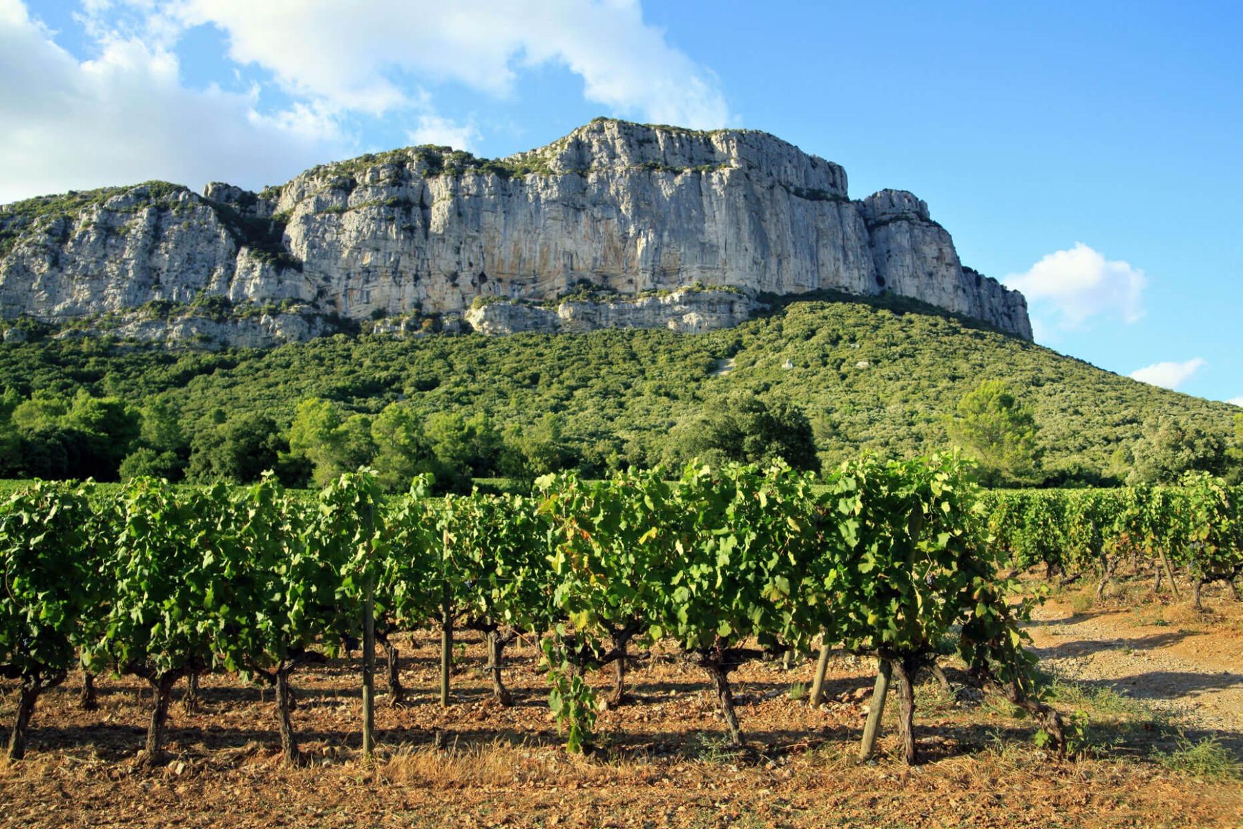 PrikenTik Wijnstreek - Languedoc